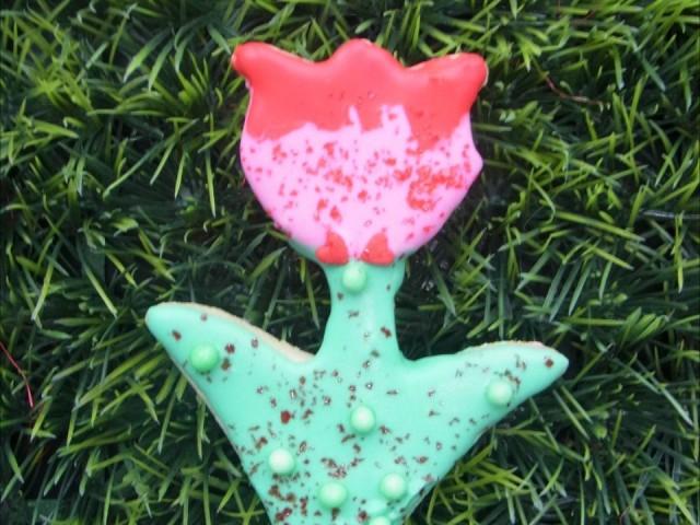 Rote Tulpe auf Gras